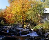 Fall Tree On A Rocky River With A Cabin — Stock Photo