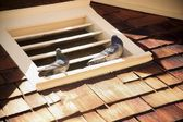 Pigeons Sitting On Roof Vent — Stock Photo