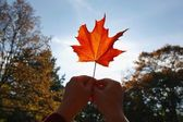 Person Holding A Maple Leaf — Stockfoto