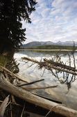 Dead Trees On A Lake — Stock Photo