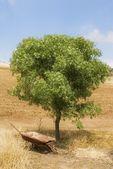Disused Wheelbarrow Under A Tree — Stock Photo