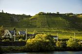 Moselle Valley And River, Germany — Stock Photo