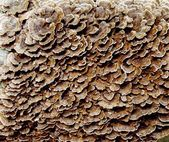 Tree Fungus — Stock Photo