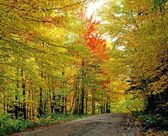 Autumn Trees Along Empty Road — Stock Photo