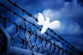 White Bird Sitting On Barbed Wire Fence — Stock Photo