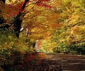 Tree Lined Road In The Fall — Stock Photo