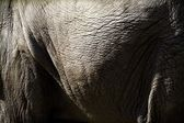 Close Up Of An Elephant's Side — Zdjęcie stockowe