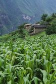 Field And Village Of Walnut Grove In Tiger Leaping Gorge, China — Stock Photo