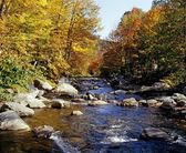 Fall Trees Lining A River — Stock Photo