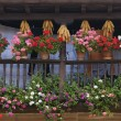 Wooden Balcony Displaying Flowers And Drying Corn Cobs, Carmona, Cantabria, Northern Spain — Stock Photo