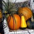 Autumn Harvest Display — Stock Photo