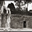 Stock Photo: TProhm Temple In Cambodia
