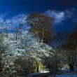 Hoars Frost On Trees In Longshaw Estate, Derbyshire, England — Stock Photo #31763713