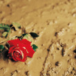 Stock Photo: Rose Discarded In Mud