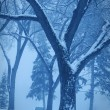 Stock Photo: Monotone Winter Scene