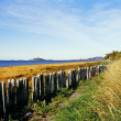 Stock Photo: Fence Along Shore