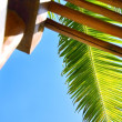 Low Angle View Of A Palm Leaf — Stock Photo #31769481