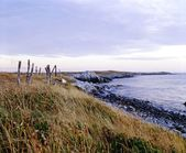 Grassy Shoreline, Lockeport, Nova Scotia — Stock Photo