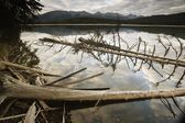 Dead Trees In The Water — Stock Photo