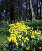 Ormeau Park, Belfast, Ireland — Stock Photo