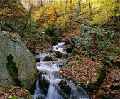 Stream Flowing Through Forest In Autumn — Stock Photo