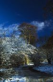 Hoars Frost On Trees In Longshaw Estate, Derbyshire, England — Stock Photo