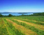Co Fermanagh, Lower Lough Erne, Boa Island, Ireland — Stock Photo