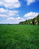 Grass Field, Ireland — Stock Photo