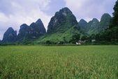 Rice Field Near Yangshuo In China — Stock Photo