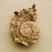 Concha do mar — Fotografia Stock