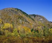 Hills Covered With Fall Colored Trees And Bushes — Stock Photo
