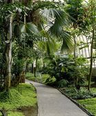 Pathway With Trees And Plants — Stock Photo