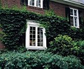 Vine Covered House — Stock Photo