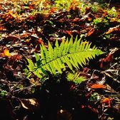 Ferns And Autumn Leaves, Co Wexford, Ireland — Foto de Stock