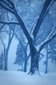 Monotone Winter Scene — Stock Photo
