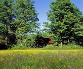 Meadow And Dilapidated Building — Стоковое фото