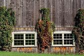 Vines Growing On The Outside Of A Barn — Stock Photo