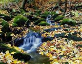 A Flowing Stream In Autumn — Stock Photo