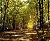 Tree Lined Road In Autumn — Stock fotografie