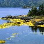 Island At Swift Current, Burin Peninsula, Newfoundland, Canada — Stock Photo