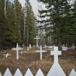 Stock Photo: Crosses In Cemetery
