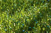 Tiny Blue Flowers — 图库照片