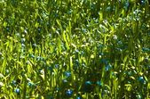 Tiny Blue Flowers — Foto de Stock