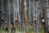 Elk In A Forest — Stock Photo