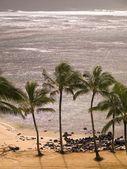 Palm Trees And Beach, Kaui, Hawaii — Foto de Stock