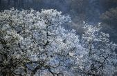 England, United Kingdom. Bare Tree Covered In Frost — Stockfoto