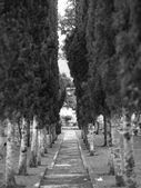 Tree Lined Path — 图库照片
