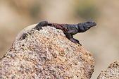 Basking On A Granite Rock — Stock Photo
