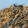 Pile Of Rubble — Stock Photo