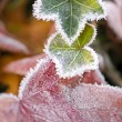 Frost On Autumn Leaves — Stock Photo